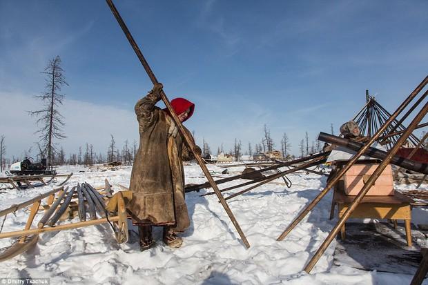 Chùm ảnh tuyệt đẹp về bộ tộc chuyên ăn thịt sống, uống máu tuần lộc - Ảnh 17.