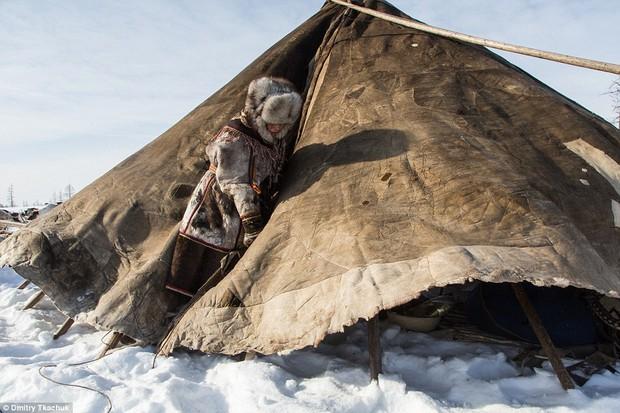 Chùm ảnh tuyệt đẹp về bộ tộc chuyên ăn thịt sống, uống máu tuần lộc - Ảnh 18.