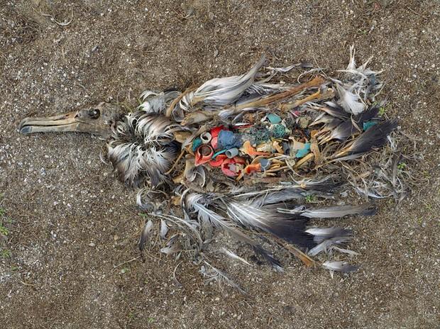Loạt ảnh chấn động cho thấy đại dương đang trở thành hố rác khổng lồ của nhân loại - Ảnh 18.
