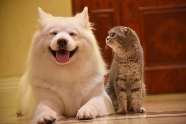 Nhà có một em cún nghịch, một bé mèo chảnh - cứ chí choé với nhau cũng phải! - Ảnh 19.