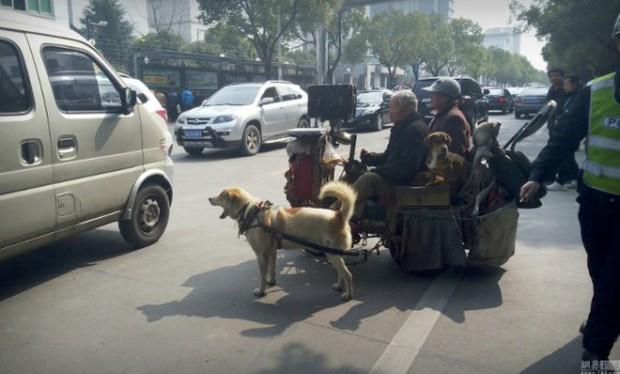 Đôi vợ chồng già chạy xe chó kéo gây sốt trên đường phố Trung Quốc - Ảnh 3.