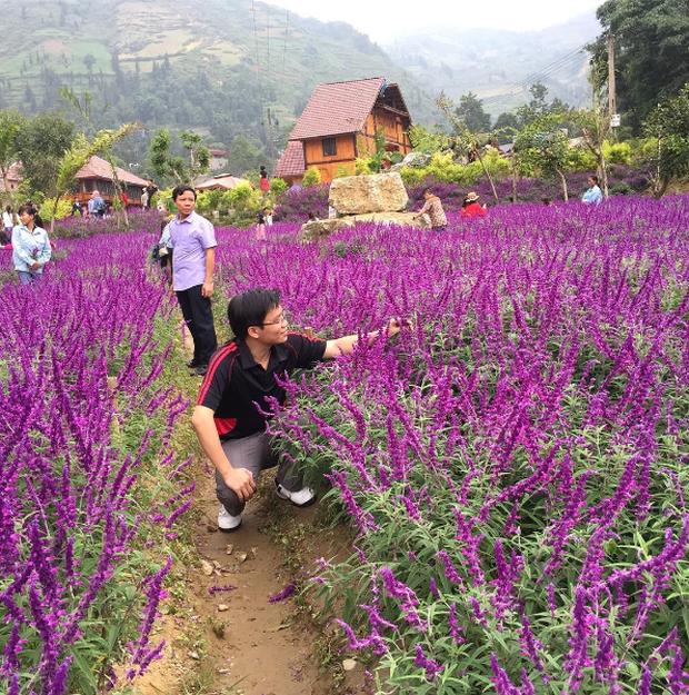 Đồng hoa tím hot nhất Lào Cai: Đẹp thì đẹp thật, nhưng chắc chắn không phải oải hương đâu! - Ảnh 6.