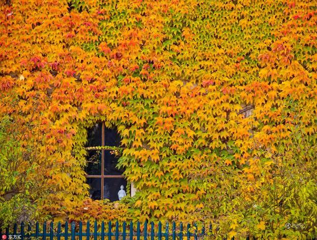 Những bức ảnh thiên nhiên tuyệt đẹp sẽ khiến bạn cảm thấy yêu mùa thu hơn bao giờ hết - Ảnh 2.