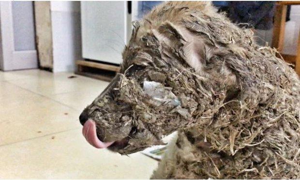Phẫn nộ cảnh chú chó con bị đổ đầy keo và bùn lên người để làm trò giải trí cho lũ trẻ - Ảnh 3.