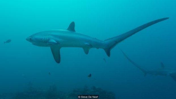 Nhờ có cá mập, đảo ngọc du lịch tại Philippines mới hồi sinh thần kì đến vậy - Ảnh 2.