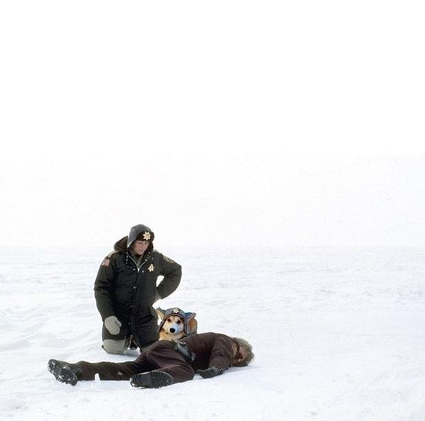 Đội mũ len quá dễ thương, chú chó Corgi đã bị các thánh chế ảnh cho lên thớt - Ảnh 4.