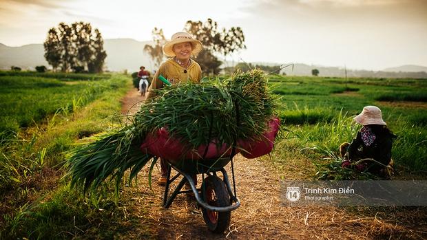 Hãy đến những nơi này để thấy Phú Yên còn đẹp hơn những gì bạn thấy trong hoa vàng cỏ xanh - Ảnh 26.