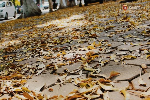 Người Hà Nội thích thú chụp ảnh với những con đường trải thảm lá vàng - Ảnh 3.