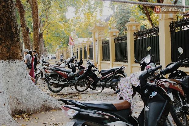 Người Hà Nội thích thú chụp ảnh với những con đường trải thảm lá vàng - Ảnh 11.