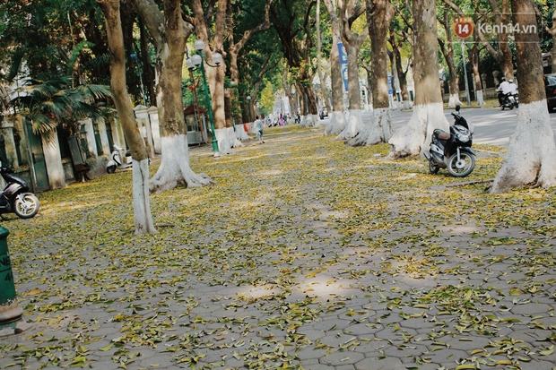 Người Hà Nội thích thú chụp ảnh với những con đường trải thảm lá vàng - Ảnh 2.