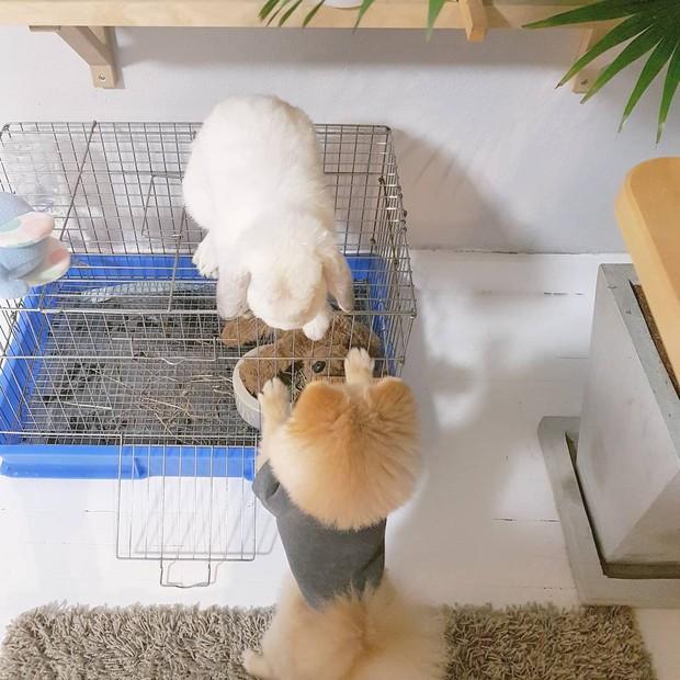 Gia đình nhỏ với trai đẹp, một em cún lúc nào cũng cười và hai chú thỏ lông xù siêu đáng yêu - Ảnh 24.