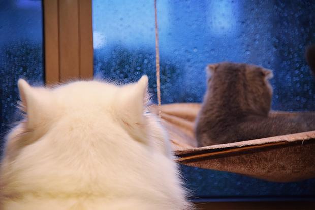 Nhà có một em cún nghịch, một bé mèo chảnh - cứ chí choé với nhau cũng phải! - Ảnh 22.