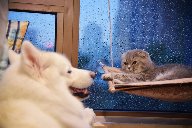Nhà có một em cún nghịch, một bé mèo chảnh - cứ chí choé với nhau cũng phải! - Ảnh 1.