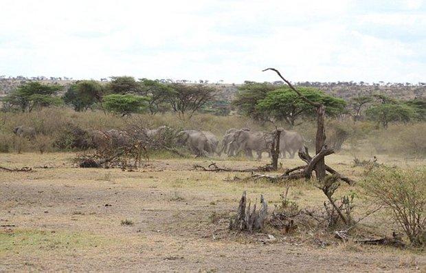 Xúc động trước cảnh tượng voi mẹ cố gắng lay gọi voi con bị mắc bẫy trong vô vọng - Ảnh 11.