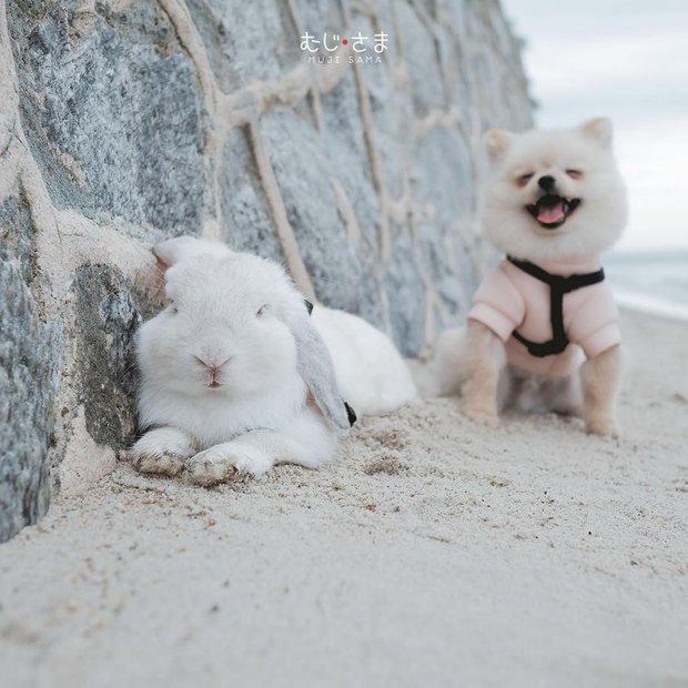 Gia đình nhỏ với trai đẹp, một em cún lúc nào cũng cười và hai chú thỏ lông xù siêu đáng yêu - Ảnh 20.