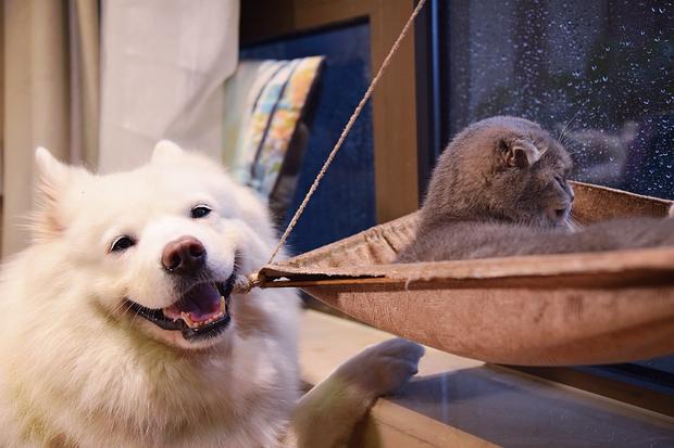 Nhà có một em cún nghịch, một bé mèo chảnh - cứ chí choé với nhau cũng phải! - Ảnh 23.