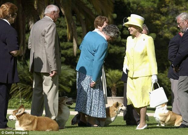 Câu chuyện đáng yêu về tiểu đội vệ binh toàn chó Corgi của Nữ hoàng Anh - Ảnh 5.