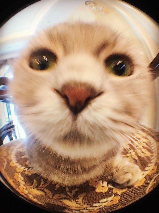Nhà có một em cún nghịch, một bé mèo chảnh - cứ chí choé với nhau cũng phải! - Ảnh 25.