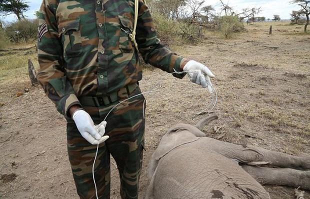 Xúc động trước cảnh tượng voi mẹ cố gắng lay gọi voi con bị mắc bẫy trong vô vọng - Ảnh 9.