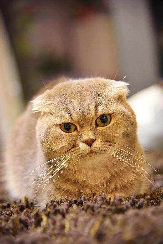 Nhà có một em cún nghịch, một bé mèo chảnh - cứ chí choé với nhau cũng phải! - Ảnh 26.