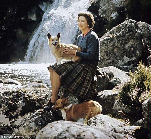 Câu chuyện đáng yêu về tiểu đội vệ binh toàn chó Corgi của Nữ hoàng Anh - Ảnh 9.