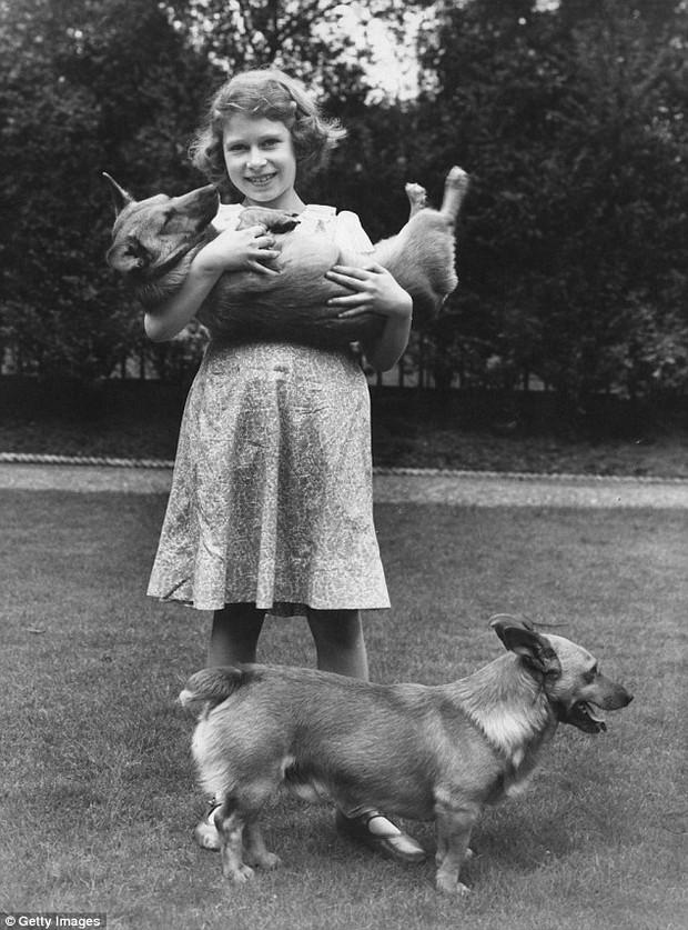 Câu chuyện đáng yêu về tiểu đội vệ binh toàn chó Corgi của Nữ hoàng Anh - Ảnh 6.