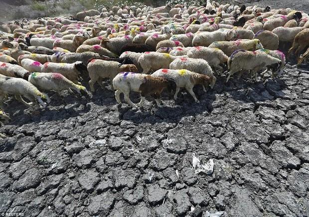 Ấn Độ: Nắng nóng 49,5 độ C, 135 người chết - Ảnh 5.