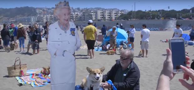 800 em cún chân ngắn làm loạn bãi biển California trong ngày hội Corgi - Ảnh 4.