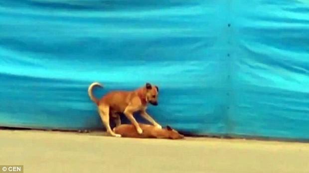 Khoảnh khắc chú chó rơi nước mắt vì cái chết của bạn thân - Ảnh 4.