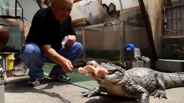 Người đàn ông Nhật Bản coi cá sấu như thú cưng, tắm rửa, đánh răng và dắt nó đi chợ mỗi ngày - Ảnh 4.