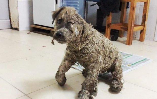 Phẫn nộ cảnh chú chó con bị đổ đầy keo và bùn lên người để làm trò giải trí cho lũ trẻ - Ảnh 4.