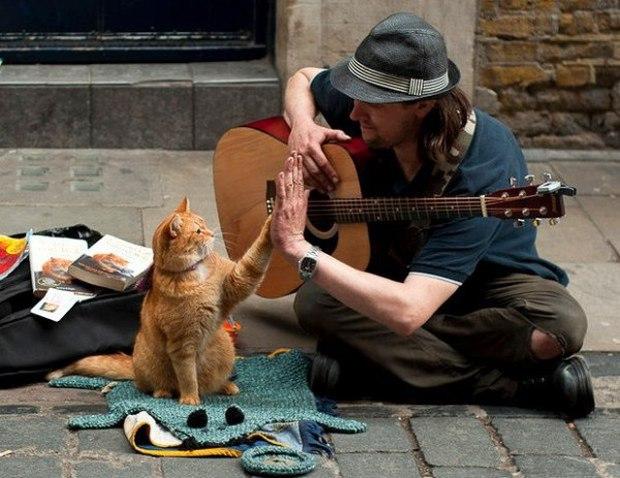 Cứu rỗi chàng nghệ sĩ nghèo vào thời điểm khốn khó nhất, chú mèo vàng trở thành nguồn cảm hứng của cả thế giới - Ảnh 3.