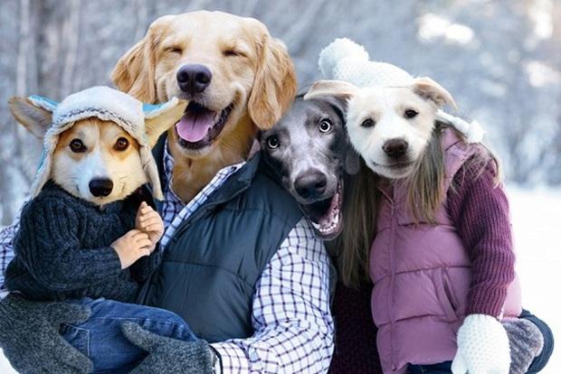 Đội mũ len quá dễ thương, chú chó Corgi đã bị các thánh chế ảnh cho lên thớt - Ảnh 6.