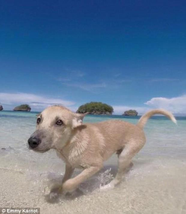 Hành động của du khách người Đức với chú chó nhỏ bị bỏ rơi sẽ khiến bạn bật khóc - Ảnh 6.