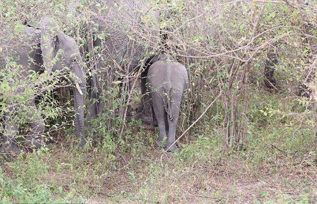 Xúc động trước cảnh tượng voi mẹ cố gắng lay gọi voi con bị mắc bẫy trong vô vọng - Ảnh 10.