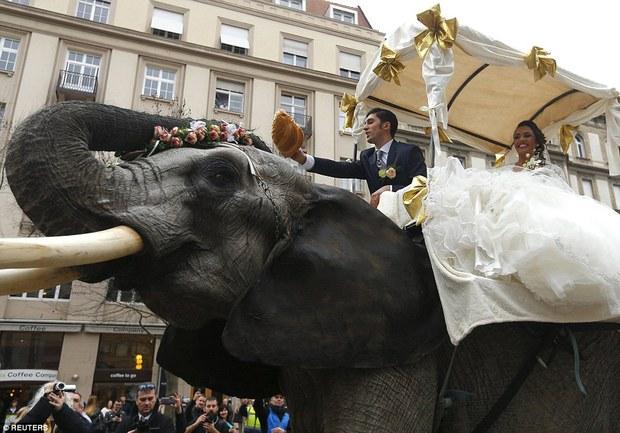 Hình ảnh cặp đôi cưỡi voi trong lễ cưới giữa đường phố Budapest gây tranh cãi - Ảnh 2.