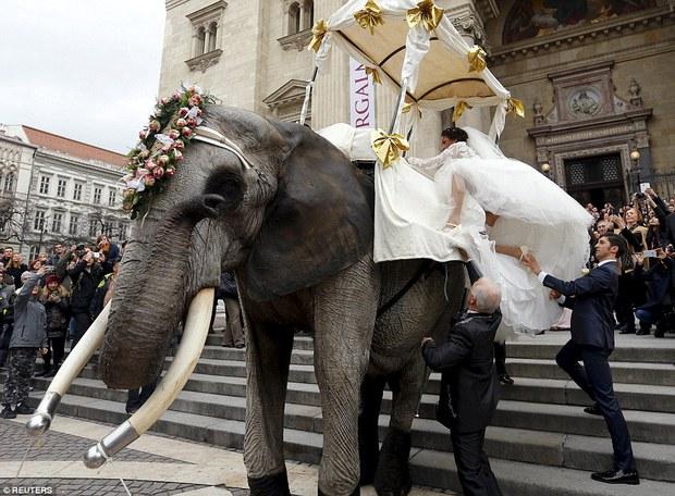 Hình ảnh cặp đôi cưỡi voi trong lễ cưới giữa đường phố Budapest gây tranh cãi - Ảnh 3.