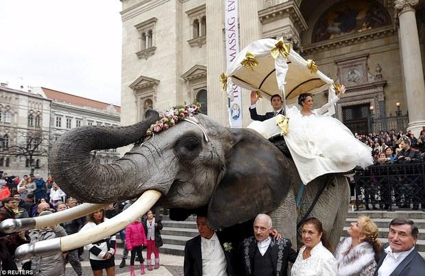 Hình ảnh cặp đôi cưỡi voi trong lễ cưới giữa đường phố Budapest gây tranh cãi - Ảnh 1.