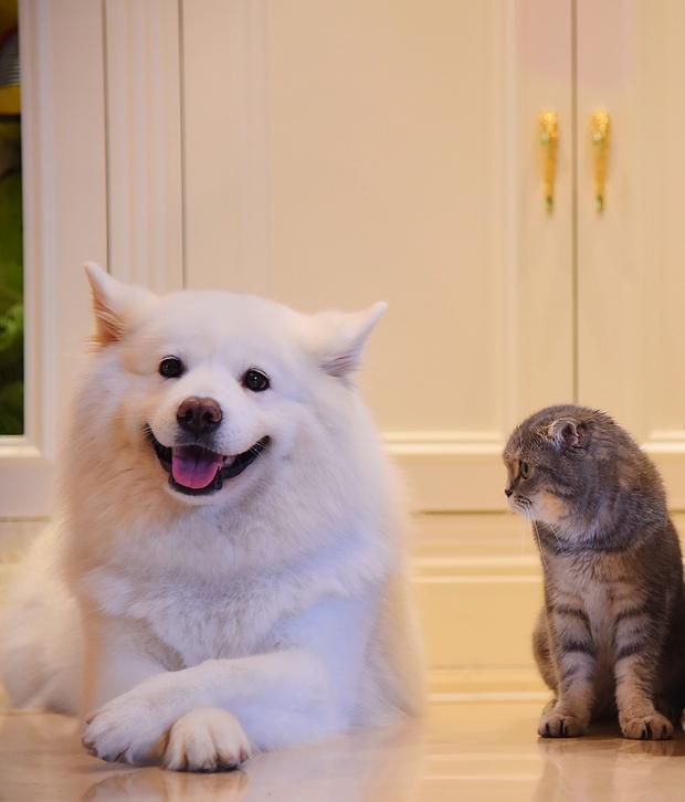 Nhà có một em cún nghịch, một bé mèo chảnh - cứ chí choé với nhau cũng phải! - Ảnh 4.