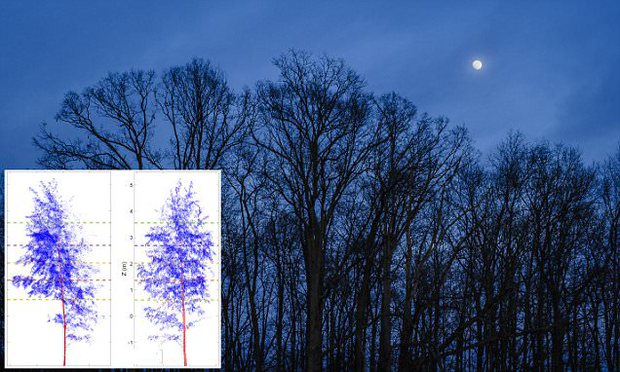 Bằng chứng cho thấy cây cối cũng biết đi ngủ giống như con người - Ảnh 2.
