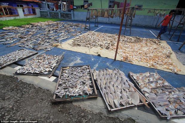 Rùng mình cảnh hàng nghìn con cá mập bị xẻo vây, phơi xác giữa chợ Indonesia - Ảnh 3.