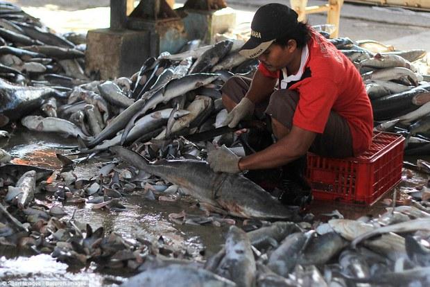 Rùng mình cảnh hàng nghìn con cá mập bị xẻo vây, phơi xác giữa chợ Indonesia - Ảnh 10.