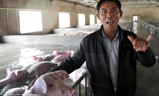 Người đàn ông khóc ròng khi phải bỏ lại 6.000 con lợn chìm trong biển nước - Ảnh 4.