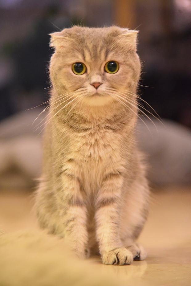 Nhà có một em cún nghịch, một bé mèo chảnh - cứ chí choé với nhau cũng phải! - Ảnh 30.