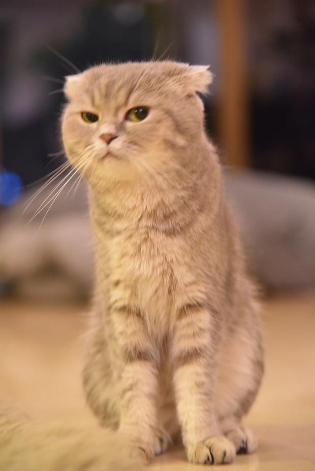Nhà có một em cún nghịch, một bé mèo chảnh - cứ chí choé với nhau cũng phải! - Ảnh 3.