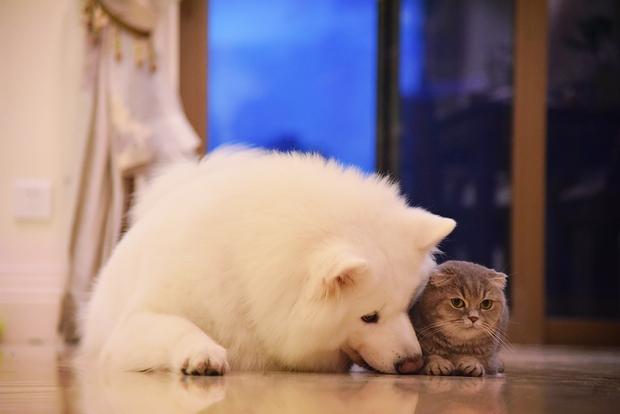 Nhà có một em cún nghịch, một bé mèo chảnh - cứ chí choé với nhau cũng phải! - Ảnh 31.