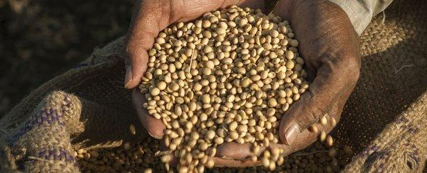 Tin mừng: Tỉ lệ đói toàn cầu đang giảm xuống mức thấp nhất từ trước đến nay - Ảnh 2.