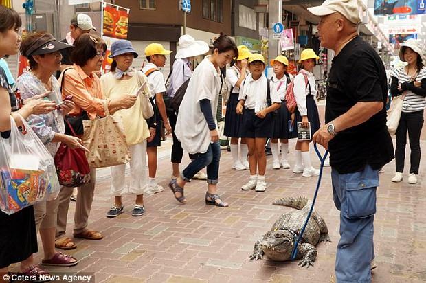 Người đàn ông Nhật Bản coi cá sấu như thú cưng, tắm rửa, đánh răng và dắt nó đi chợ mỗi ngày - Ảnh 2.