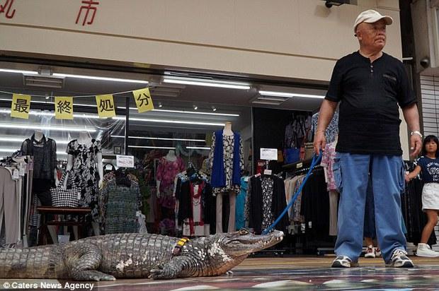 Người đàn ông Nhật Bản coi cá sấu như thú cưng, tắm rửa, đánh răng và dắt nó đi chợ mỗi ngày - Ảnh 8.