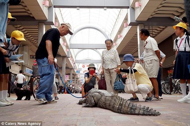 Người đàn ông Nhật Bản coi cá sấu như thú cưng, tắm rửa, đánh răng và dắt nó đi chợ mỗi ngày - Ảnh 7.